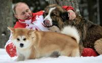 Practicing Judo neck holds on friendly dogs. Typical for a monster like Putin.