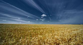 Russia Now Supplies More Than Half the World's Wheat Exports