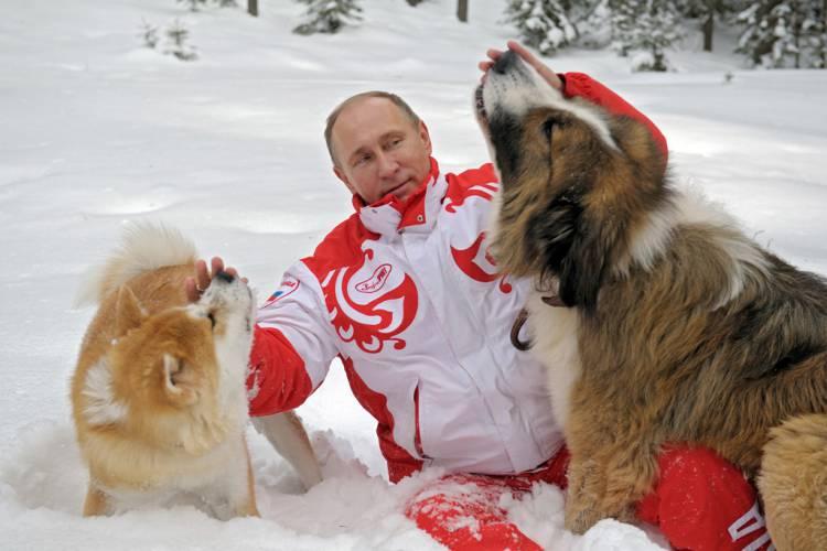 2012 Japan dog left, 2010 Bulgaria dog right
