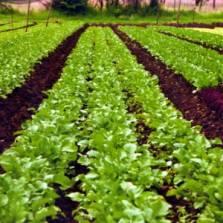 Government policies encourage autonomous family farming