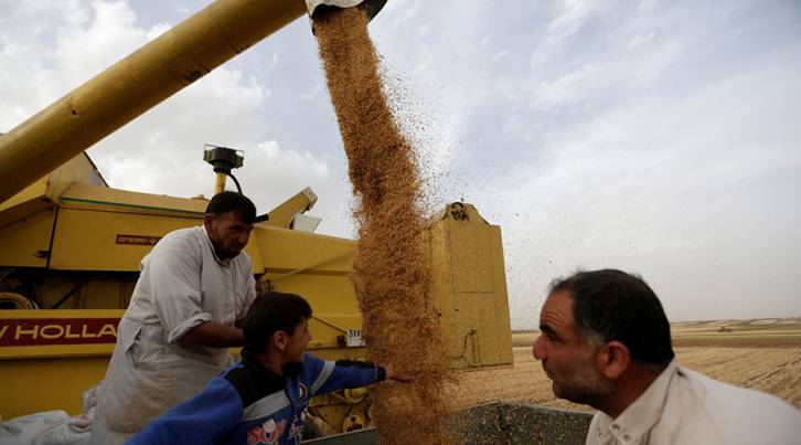 <figcaption>Farmers inspect wheat falling from a combine harvester at a wheat field in southern Idlib countryside, Syria © Khalil Ashawi / Reuters</figcaption>