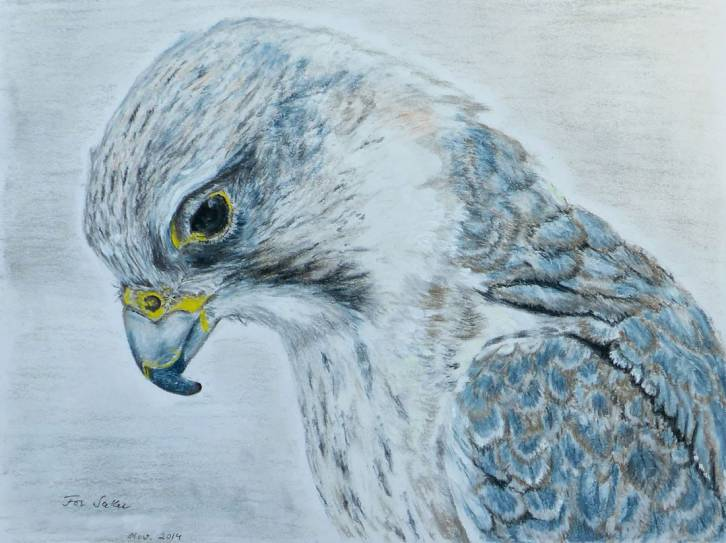 <figcaption>A Saker is a large falcon, native to Europe and Asia</figcaption>