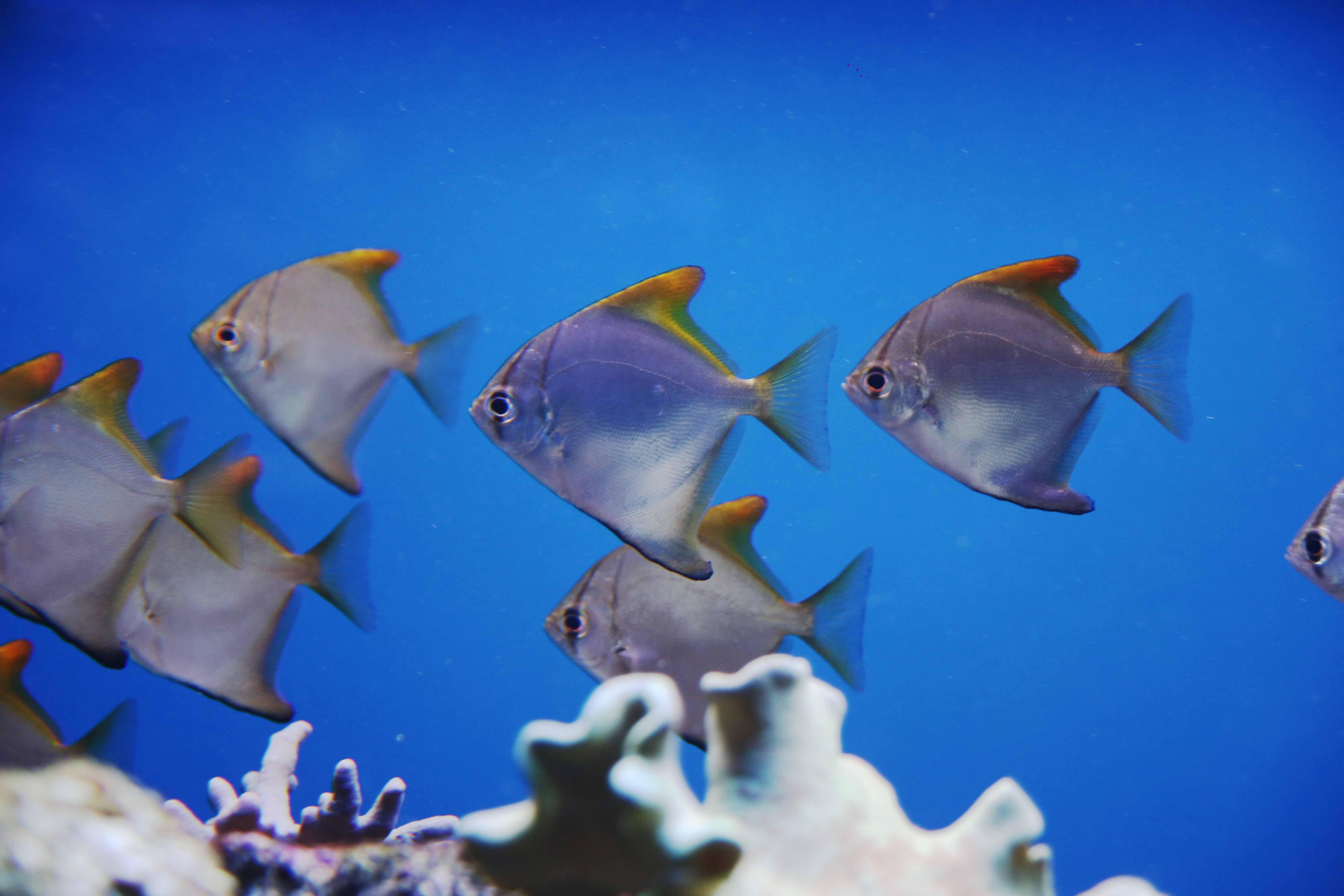 Coral-eating fish